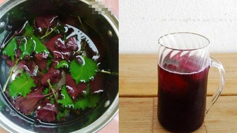 Sử dụng lá tía tô tươi để nấu nước uống