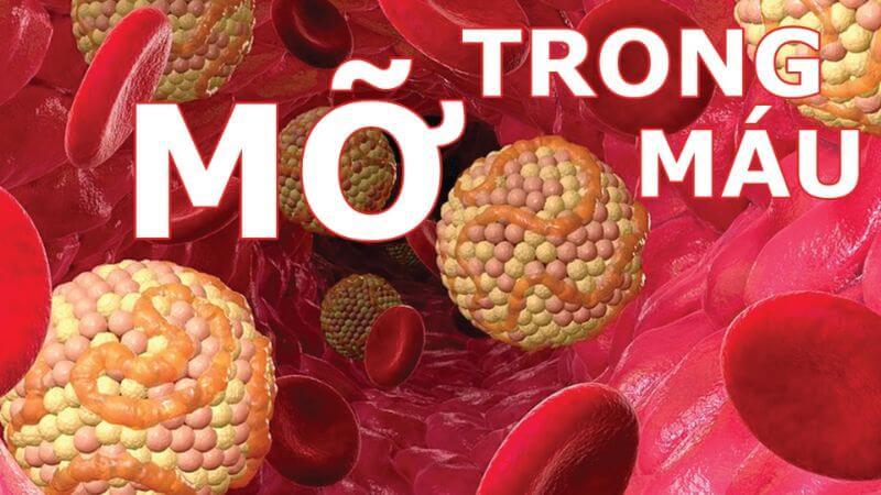 Mỡ trong máu tăng cao làm rối loạn chức năng chuyển hóa của cơ thể